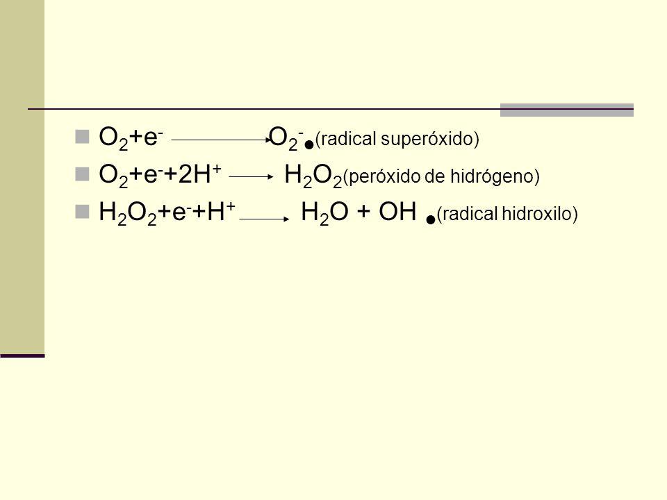 O 2 +e - O 2 - (radical superóxido) O 2 +e - +2H + H 2 O 2 (peróxido de hidrógeno) H 2 O 2 +e - +H + H 2 O + OH (radical hidroxilo)