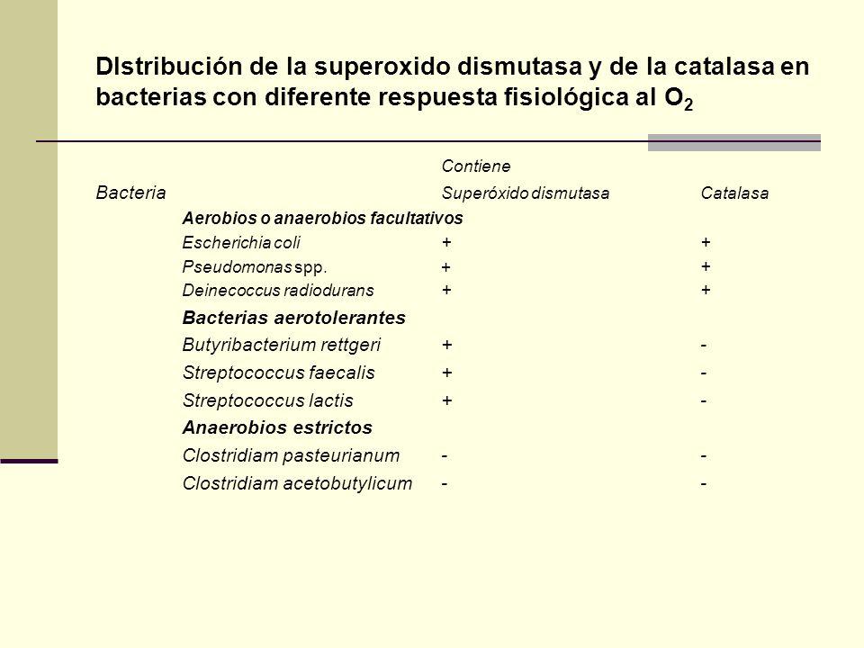 Dlstribución de la superoxido dismutasa y de la catalasa en bacterias con diferente respuesta fisiológica al O 2 Contiene Bacteria Superóxido dismutas