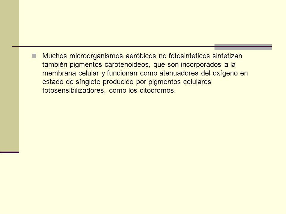 Muchos microorganismos aeróbicos no fotosinteticos sintetizan también pigmentos carotenoideos, que son incorporados a la membrana celular y funcionan