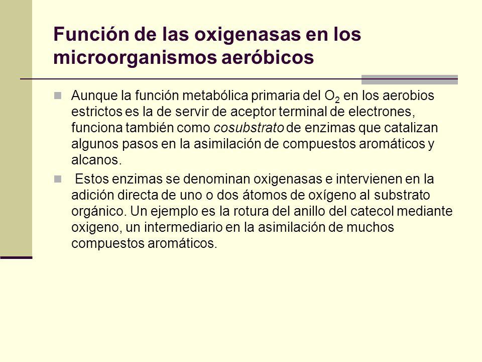 Función de las oxigenasas en los microorganismos aeróbicos Aunque la función metabólica primaria del O 2 en los aerobios estrictos es la de servir de