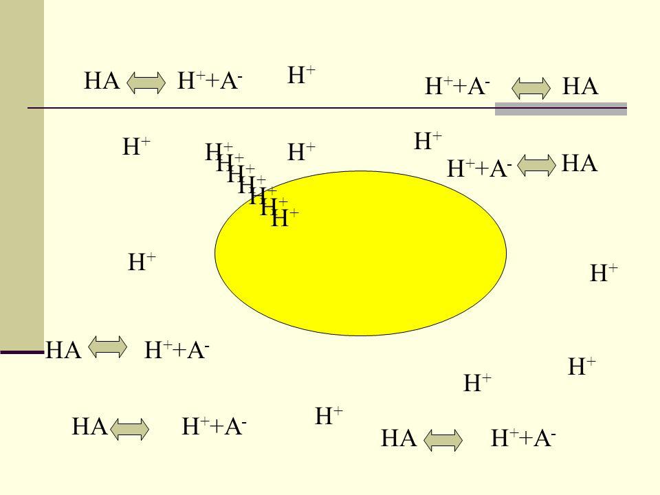HAH + + A - H+H+ H+H+ H+H+ H+H+ H+H+ H+H+ H+H+ H+H+ H+H+ H+H+ H+H+ HA H + +A - A-A- A-A-