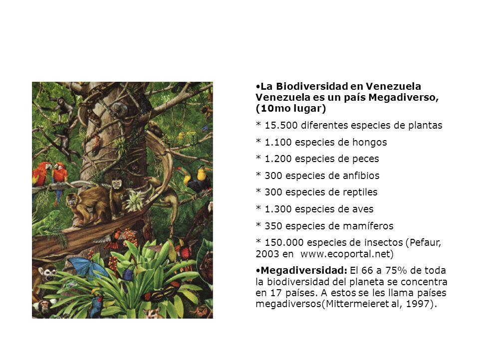 La Biodiversidad en Venezuela Venezuela es un país Megadiverso, (10mo lugar) * 15.500 diferentes especies de plantas * 1.100 especies de hongos * 1.200 especies de peces * 300 especies de anfibios * 300 especies de reptiles * 1.300 especies de aves * 350 especies de mamíferos * 150.000 especies de insectos (Pefaur, 2003 en www.ecoportal.net) Megadiversidad: El 66 a 75% de toda la biodiversidad del planeta se concentra en 17 países.