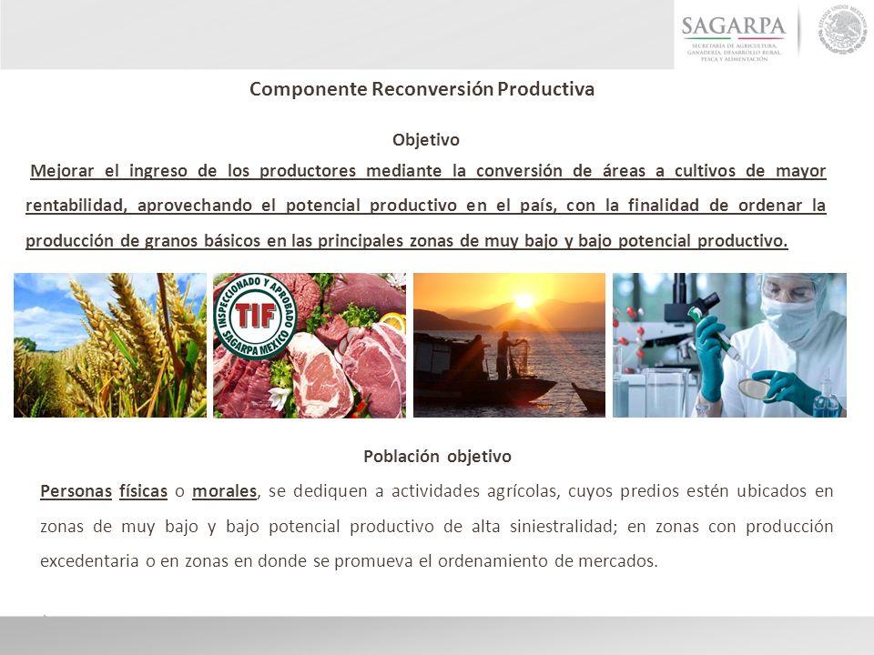 Componente Reconversión Productiva Objetivo Mejorar el ingreso de los productores mediante la conversión de áreas a cultivos de mayor rentabilidad, aprovechando el potencial productivo en el país, con la finalidad de ordenar la producción de granos básicos en las principales zonas de muy bajo y bajo potencial productivo.
