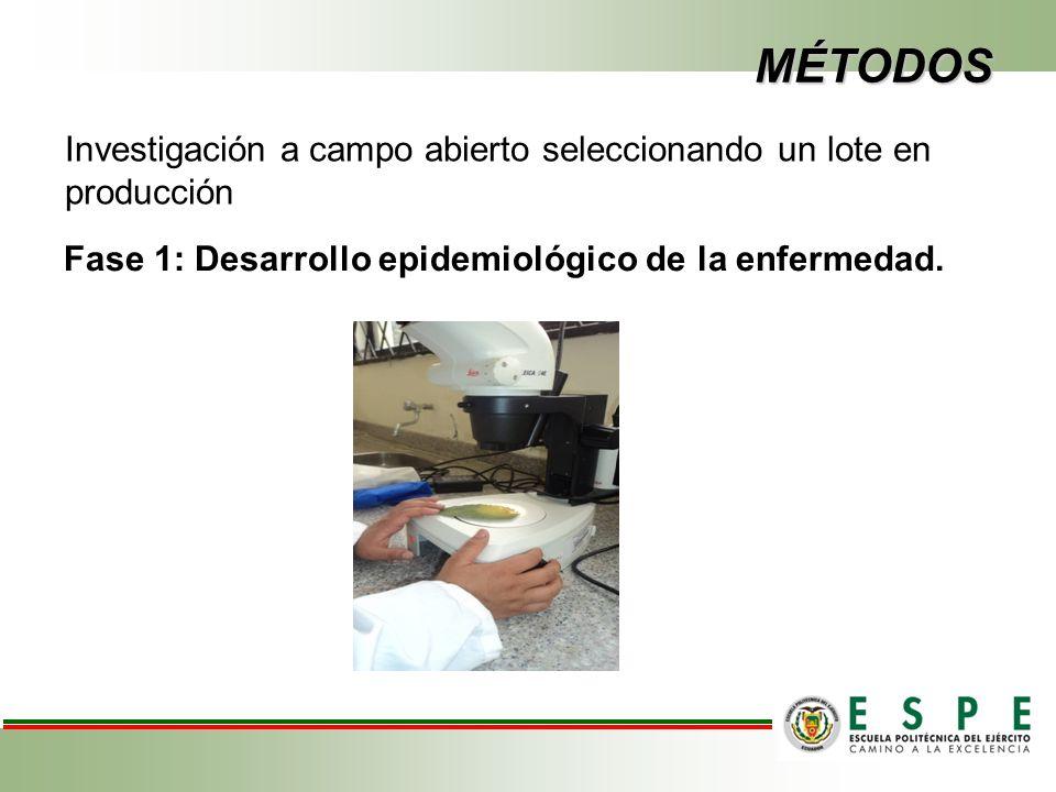 MÉTODOS Fase 1: Desarrollo epidemiológico de la enfermedad.