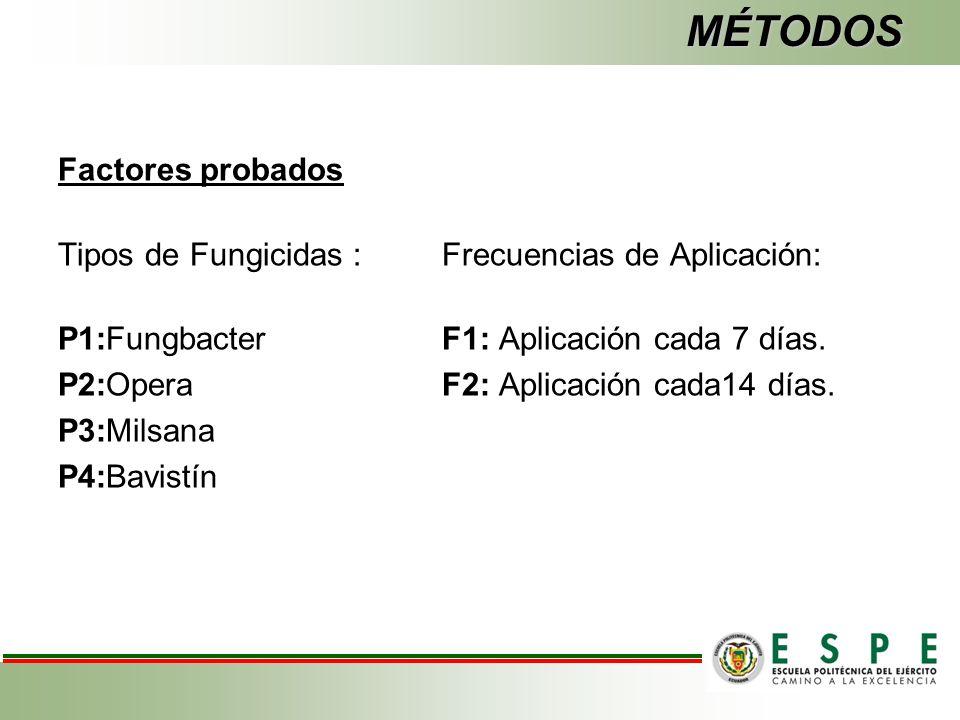 MÉTODOS Factores probados Tipos de Fungicidas :Frecuencias de Aplicación: P1:FungbacterF1: Aplicación cada 7 días.
