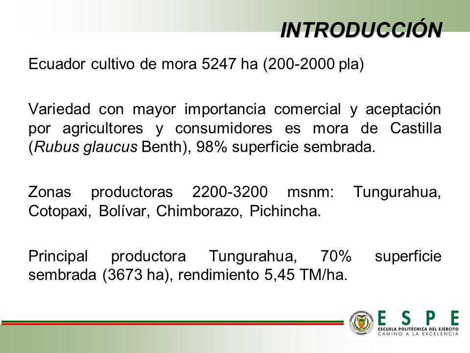 INTRODUCCIÓN Ha dado sustento y desarrollo económico a pequeños agricultores, ya que han recibido buenos ingresos lo cual ha permitido un mejoramiento en su condición de vida.