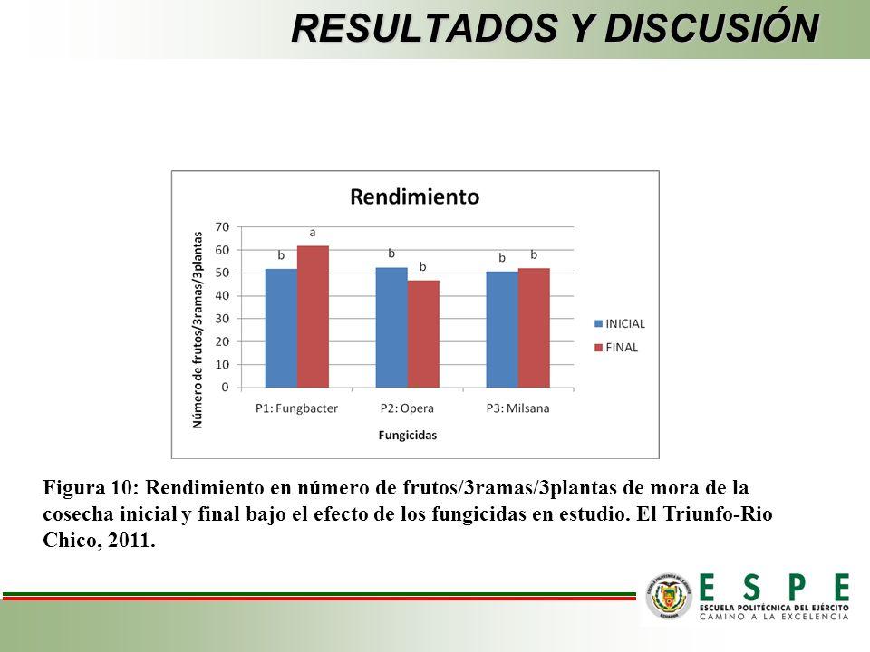 RESULTADOS Y DISCUSIÓN Figura 10: Rendimiento en número de frutos/3ramas/3plantas de mora de la cosecha inicial y final bajo el efecto de los fungicidas en estudio.