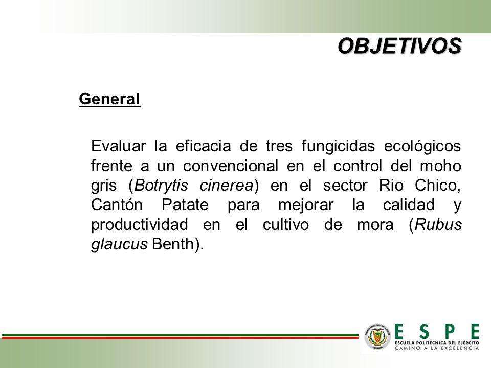OBJETIVOS Específicos 1.Evaluar tres productos ecológicos en los periodos de mayor susceptibilidad del cultivo (brotación, floración y formación de frutos) en base a la incidencia y severidad del patógeno.