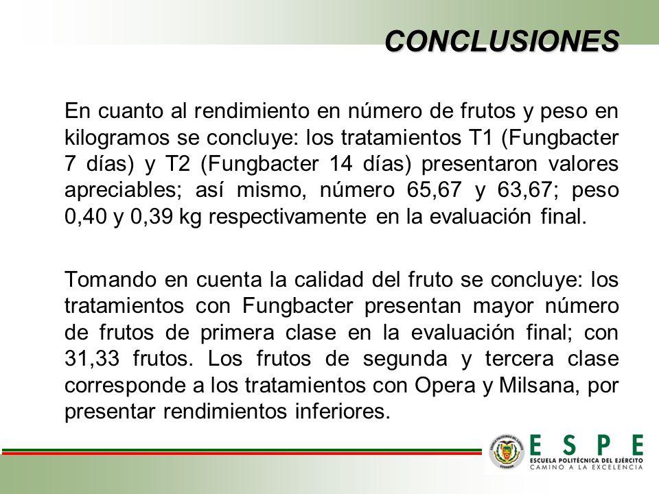 CONCLUSIONES En cuanto al rendimiento en número de frutos y peso en kilogramos se concluye: los tratamientos T1 (Fungbacter 7 días) y T2 (Fungbacter 14 días) presentaron valores apreciables; así mismo, número 65,67 y 63,67; peso 0,40 y 0,39 kg respectivamente en la evaluación final.
