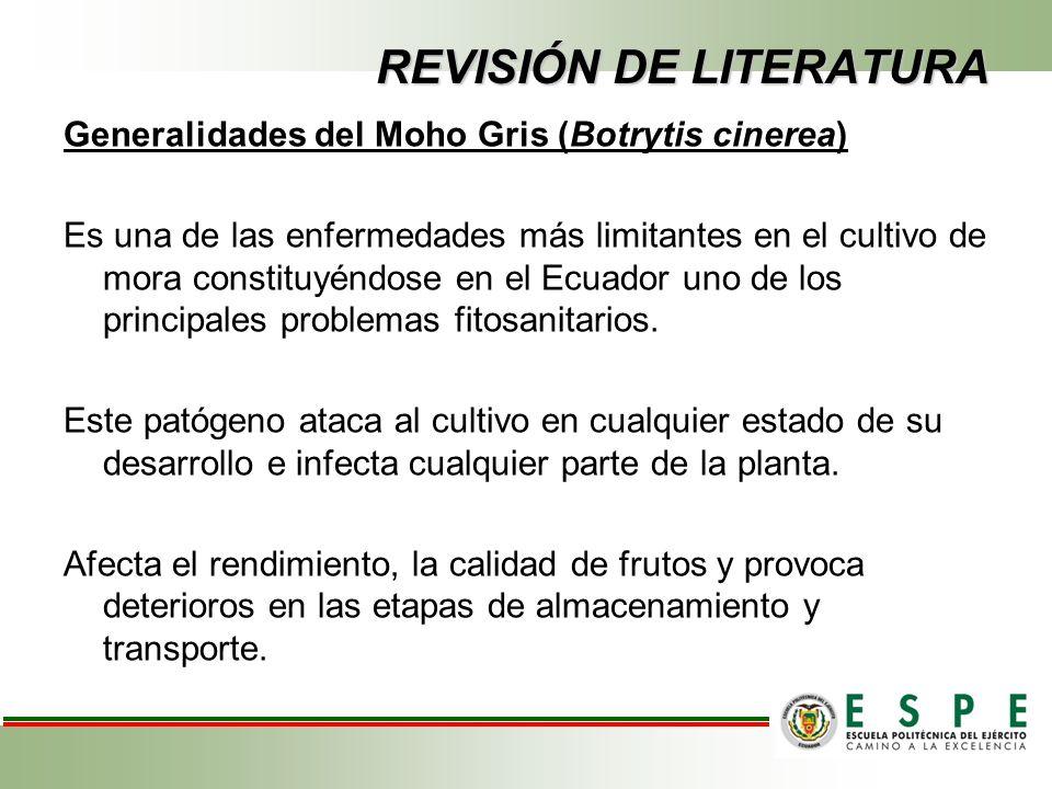 REVISIÓN DE LITERATURA Generalidades del Moho Gris (Botrytis cinerea) Es una de las enfermedades más limitantes en el cultivo de mora constituyéndose en el Ecuador uno de los principales problemas fitosanitarios.
