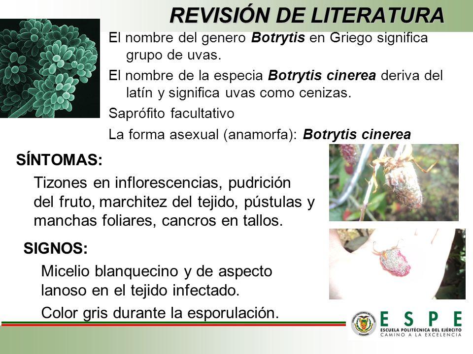 REVISIÓN DE LITERATURA El nombre del genero Botrytis en Griego significa grupo de uvas.