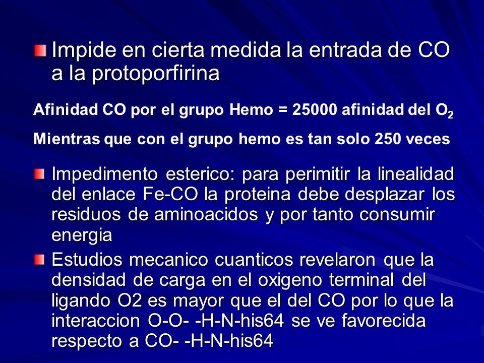 Impide en cierta medida la entrada de CO a la protoporfirina Afinidad CO por el grupo Hemo = 25000 afinidad del O 2 Mientras que con el grupo hemo es tan solo 250 veces Impedimento esterico: para perimitir la linealidad del enlace Fe-CO la proteina debe desplazar los residuos de aminoacidos y por tanto consumir energia Estudios mecanico cuanticos revelaron que la densidad de carga en el oxigeno terminal del ligando O2 es mayor que el del CO por lo que la interaccion O-O- -H-N-his64 se ve favorecida respecto a CO- -H-N-his64