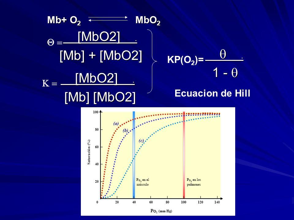 [MbO2]. [MbO2]. [Mb] + [MbO2] [MbO2]. [MbO2]. [Mb] [MbO2] [Mb] [MbO2].. 1 - 1 - KP(O 2 )= Ecuacion de Hill Mb+ O 2 MbO 2