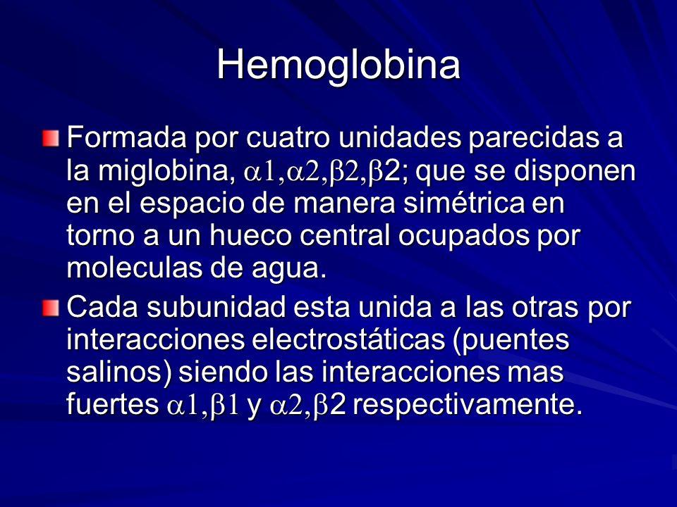 Hemoglobina Formada por cuatro unidades parecidas a la miglobina, 2; que se disponen en el espacio de manera simétrica en torno a un hueco central ocupados por moleculas de agua.