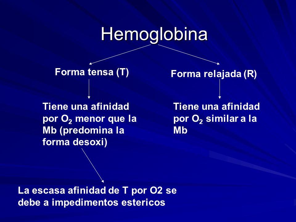 Hemoglobina Forma tensa (T) Forma relajada (R) Tiene una afinidad por O 2 menor que la Mb (predomina la forma desoxi) Tiene una afinidad por O 2 similar a la Mb La escasa afinidad de T por O2 se debe a impedimentos estericos