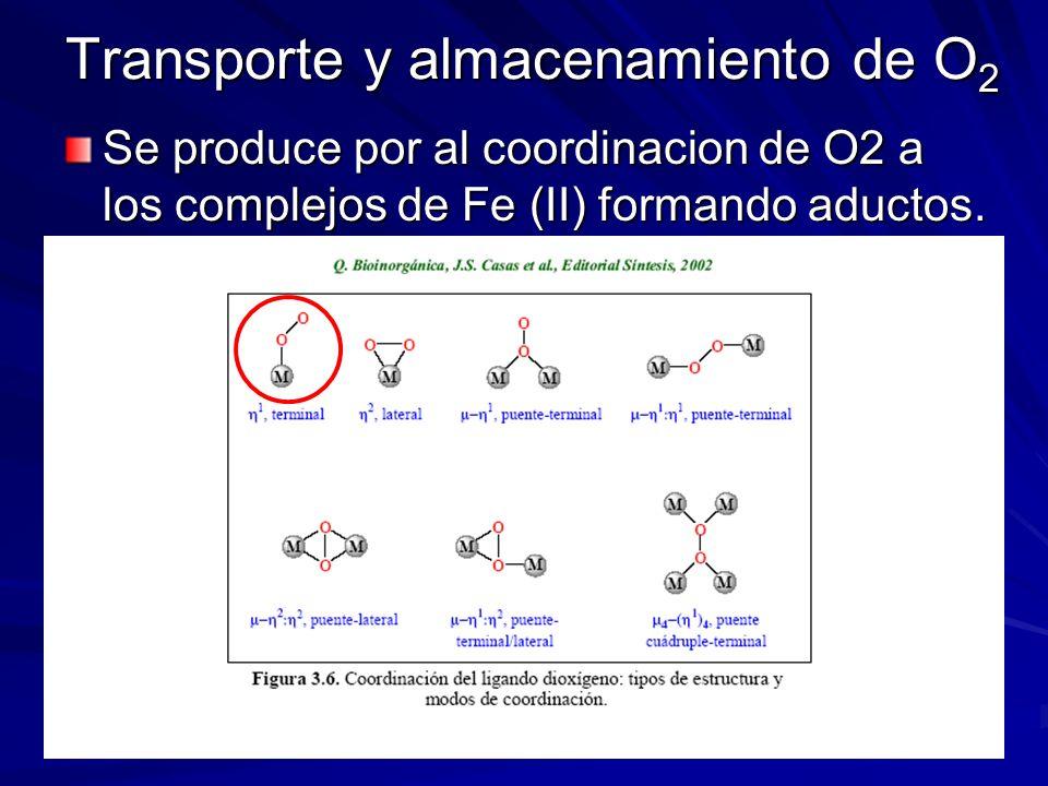 Transporte y almacenamiento de O 2 Se produce por al coordinacion de O2 a los complejos de Fe (II) formando aductos.