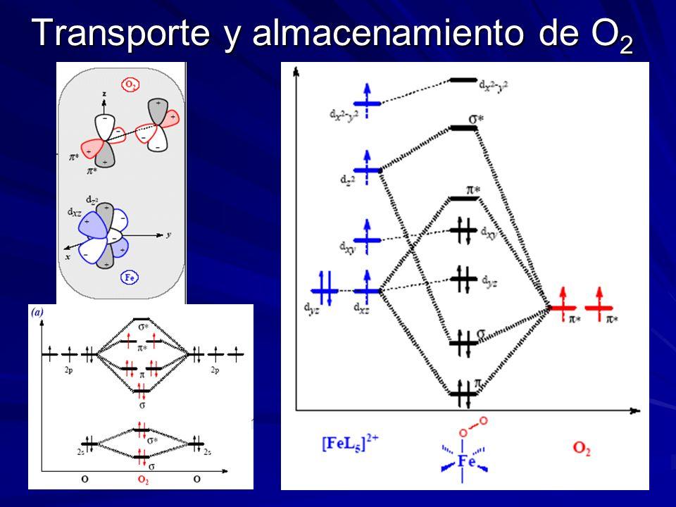 Mioglobina 0,4 A 2,04 A Cabe Fe II bajo spin Fe III bajo spin