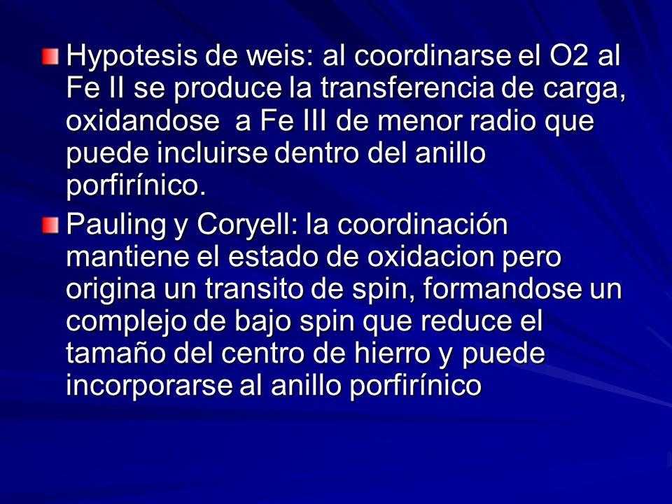Hypotesis de weis: al coordinarse el O2 al Fe II se produce la transferencia de carga, oxidandose a Fe III de menor radio que puede incluirse dentro d