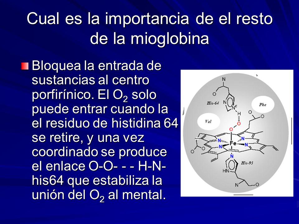 Cual es la importancia de el resto de la mioglobina Bloquea la entrada de sustancias al centro porfirínico. El O 2 solo puede entrar cuando la el resi
