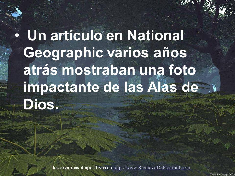 Un artículo en National Geographic varios años atrás mostraban una foto impactante de las Alas de Dios.