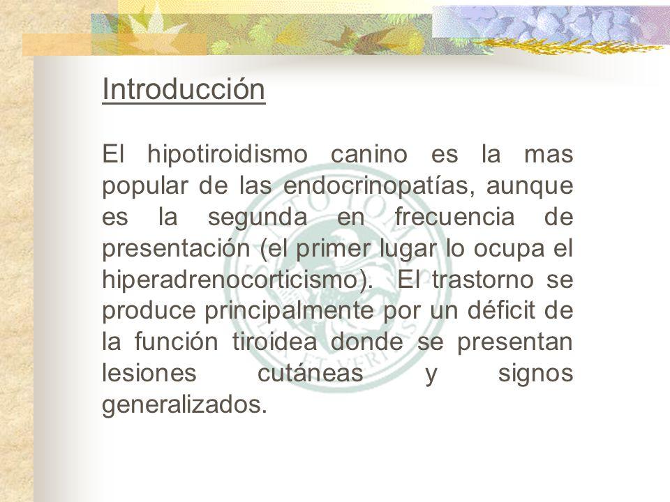 Determinación de TSH endógena – es el método mas moderno para determinar hipotiroidismos primarios o secundarios.