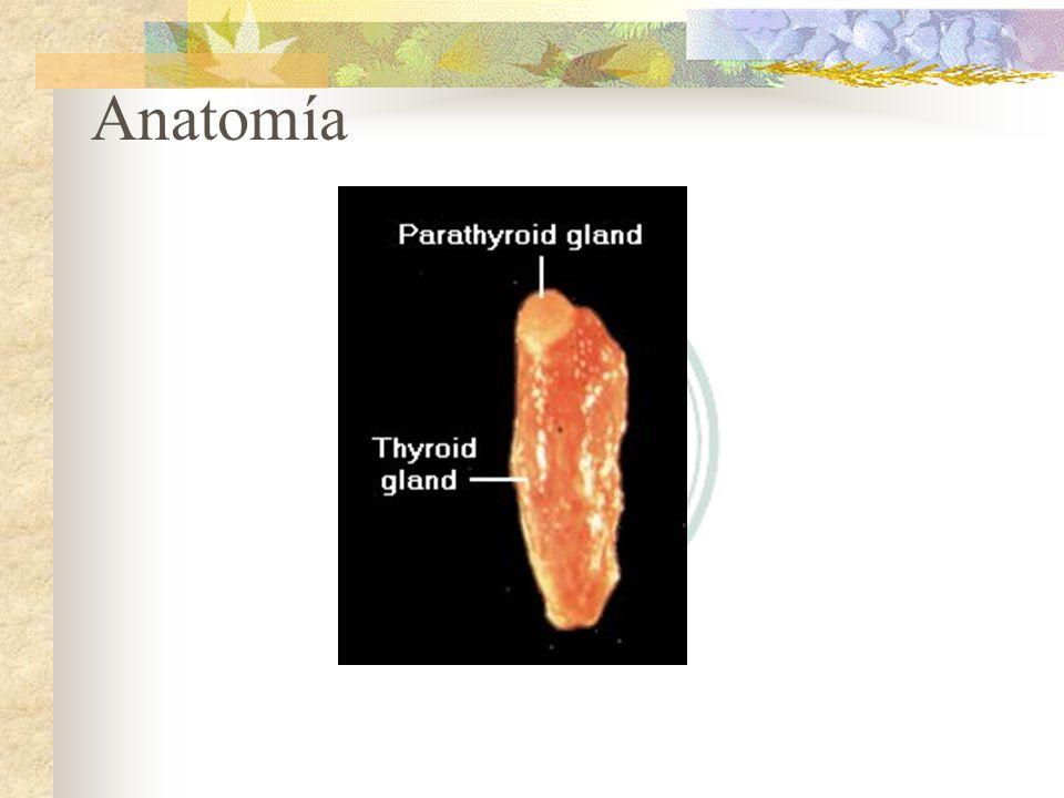 Histología Glándula tiroides