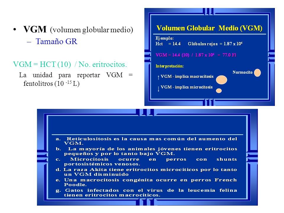 VGM (volumen globular medio) –Tamaño GR VGM = HCT (10) / No. eritrocitos. La unidad para reportar VGM = fentolitros (10 -15 L)