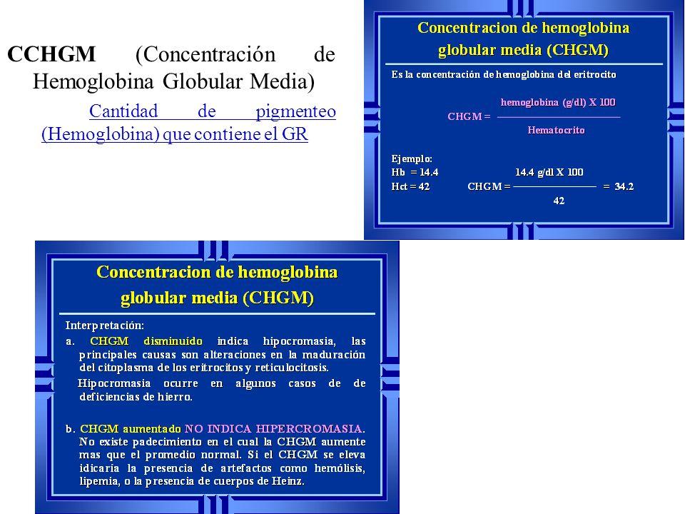CCHGM (Concentración de Hemoglobina Globular Media) Cantidad de pigmenteo (Hemoglobina) que contiene el GR