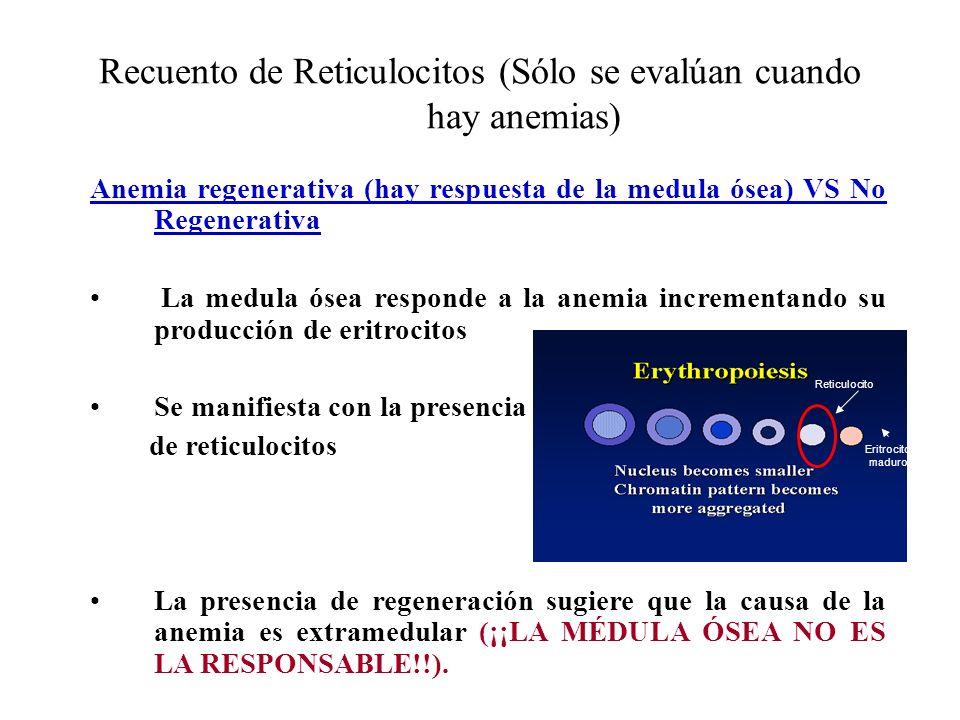 Recuento de Reticulocitos (Sólo se evalúan cuando hay anemias) Anemia regenerativa (hay respuesta de la medula ósea) VS No Regenerativa La medula ósea