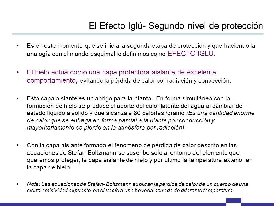 El Efecto Iglú- Segundo nivel de protección Es en este momento que se inicia la segunda etapa de protección y que haciendo la analogía con el mundo es