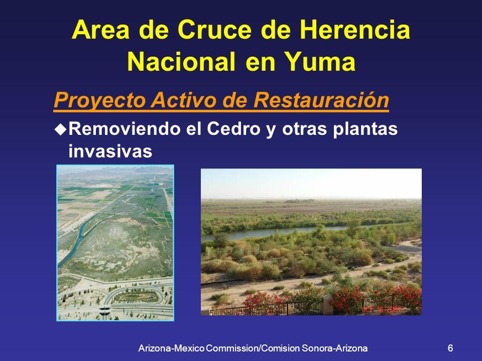 Arizona-Mexico Commission/Comision Sonora-Arizona6 Area de Cruce de Herencia Nacional en Yuma Proyecto Activo de Restauración Removiendo el Cedro y ot