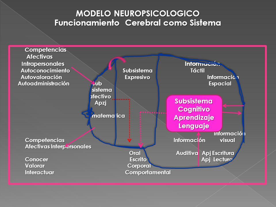 MODELO NEUROPSICOLOGICO Funcionamiento Cerebral como Sistema Competencias Competencias Afectivas Afectivas Intrapersonales Información Intrapersonales