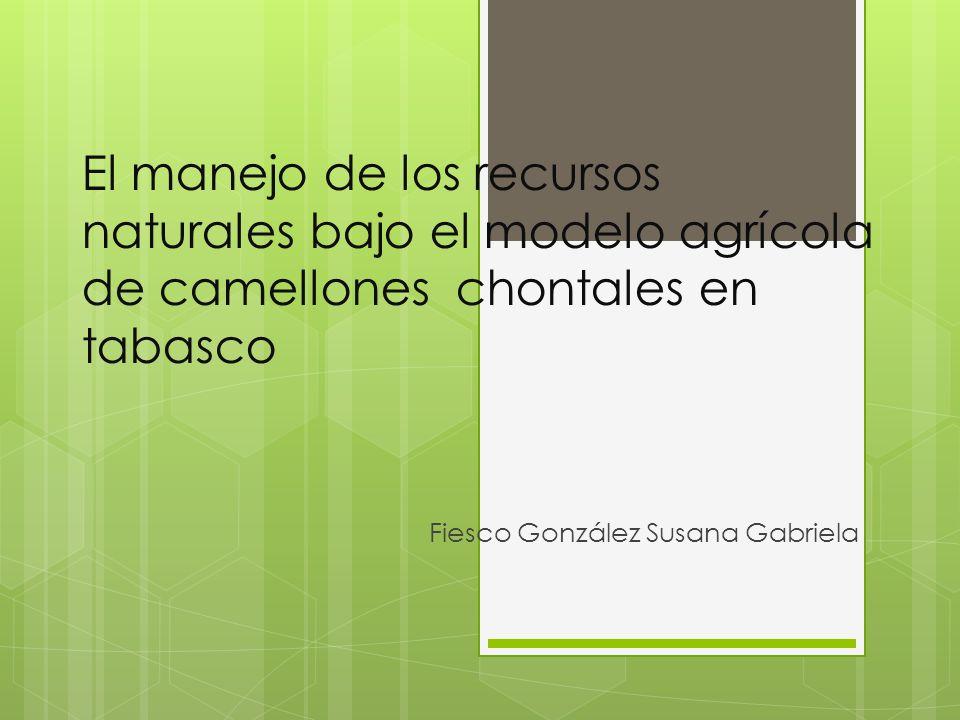 El manejo de los recursos naturales bajo el modelo agrícola de camellones chontales en tabasco Fiesco González Susana Gabriela