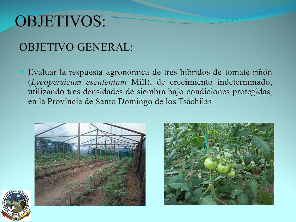 No existió incidencia de plagas en los cultivares debido al manejo fitosanitario y la infraestructura utilizada.