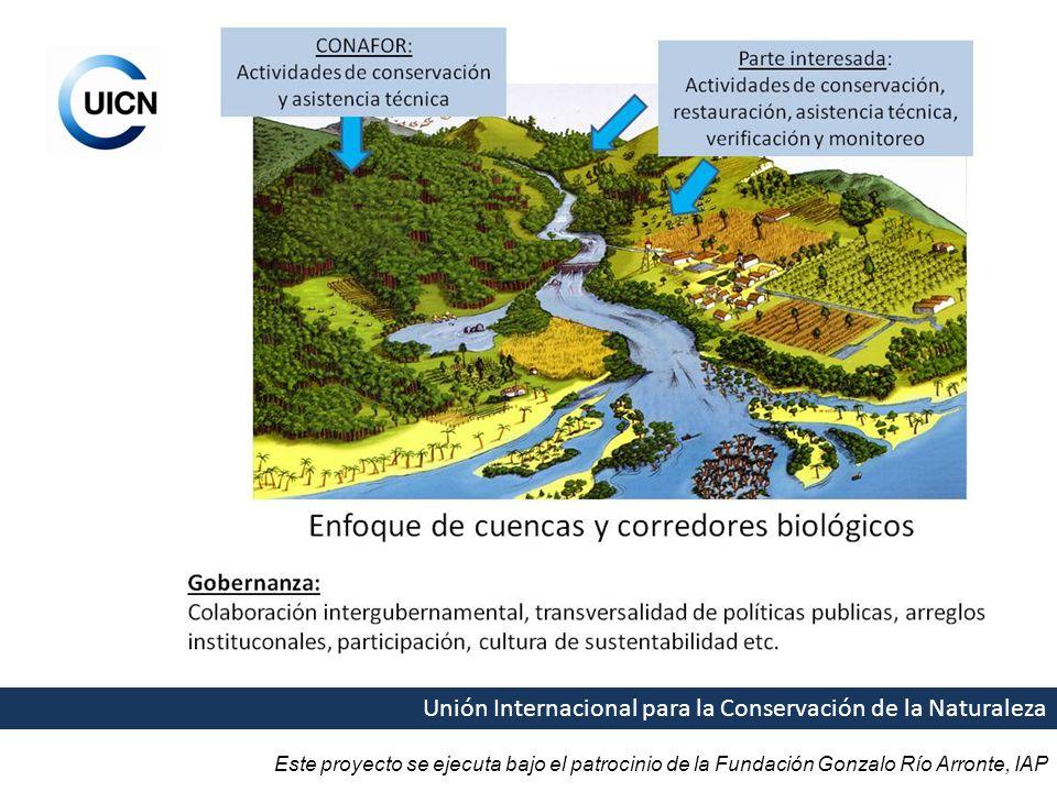 Este proyecto se ejecuta bajo el patrocinio de la Fundación Gonzalo Río Arronte, IAP Unión Internacional para la Conservación de la Naturaleza