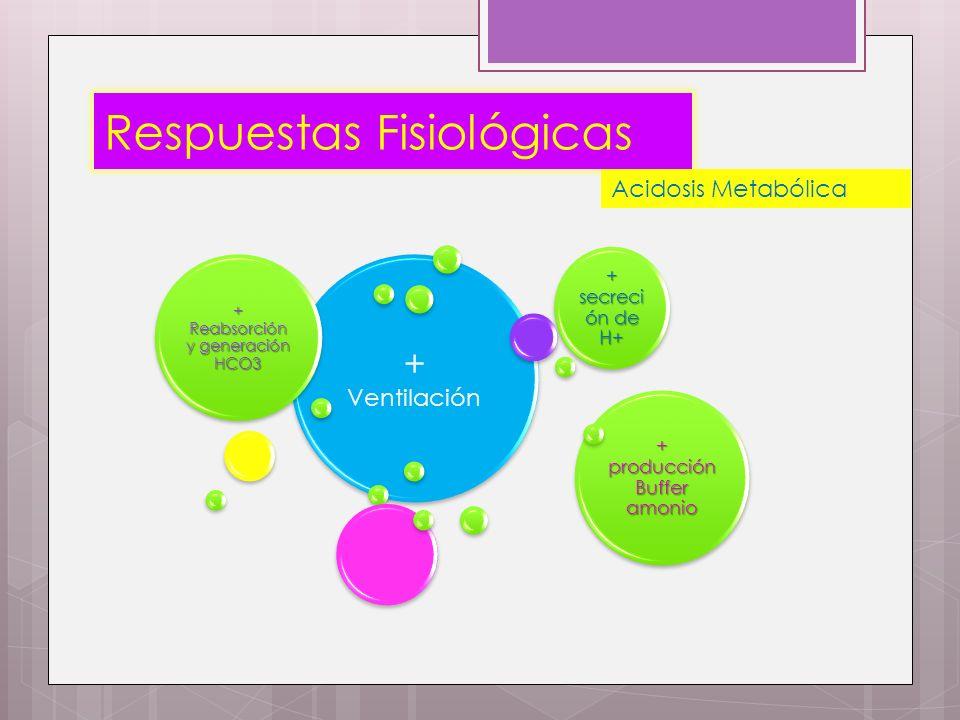 Respuestas Fisiológicas + Ventilación + Reabsorción y generación HCO3 + secreci ón de H+ + producción Buffer amonio Acidosis Metabólica