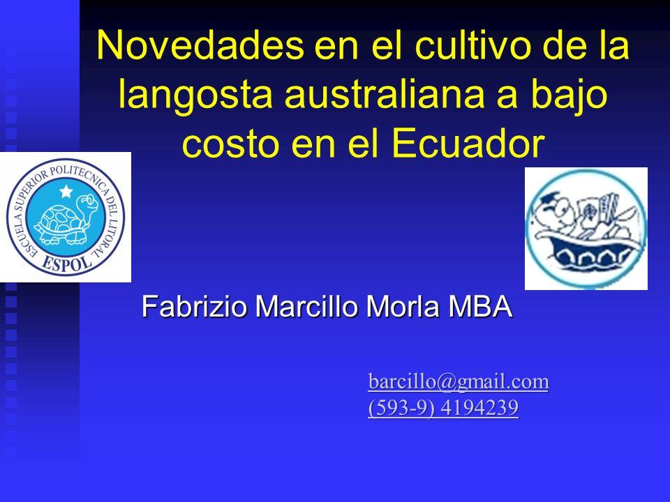 Novedades en el cultivo de la langosta australiana a bajo costo en el Ecuador Fabrizio Marcillo Morla MBA barcillo@gmail.com (593-9) 4194239 (593-9) 4