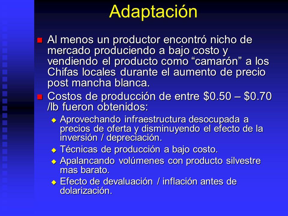 Adaptación Al menos un productor encontró nicho de mercado produciendo a bajo costo y vendiendo el producto como camarón a los Chifas locales durante