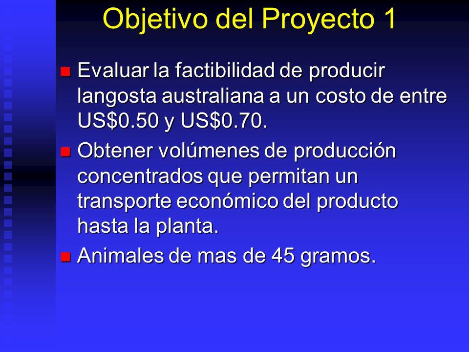 Objetivo del Proyecto 1 Evaluar la factibilidad de producir langosta australiana a un costo de entre US$0.50 y US$0.70. Evaluar la factibilidad de pro