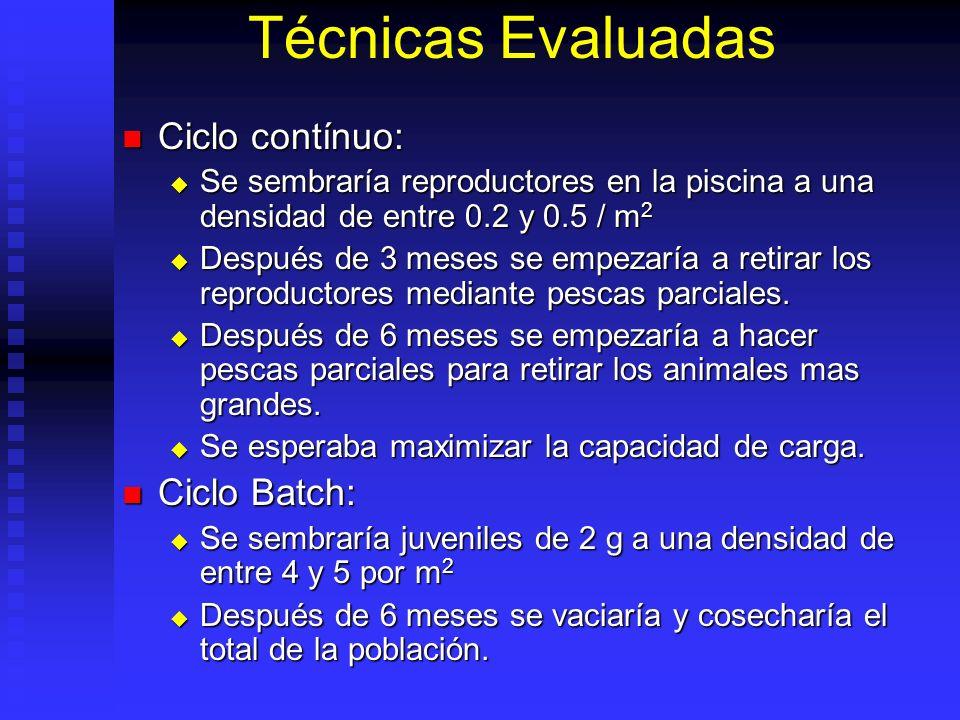 Técnicas Evaluadas Ciclo contínuo: Ciclo contínuo: Se sembraría reproductores en la piscina a una densidad de entre 0.2 y 0.5 / m 2 Se sembraría repro