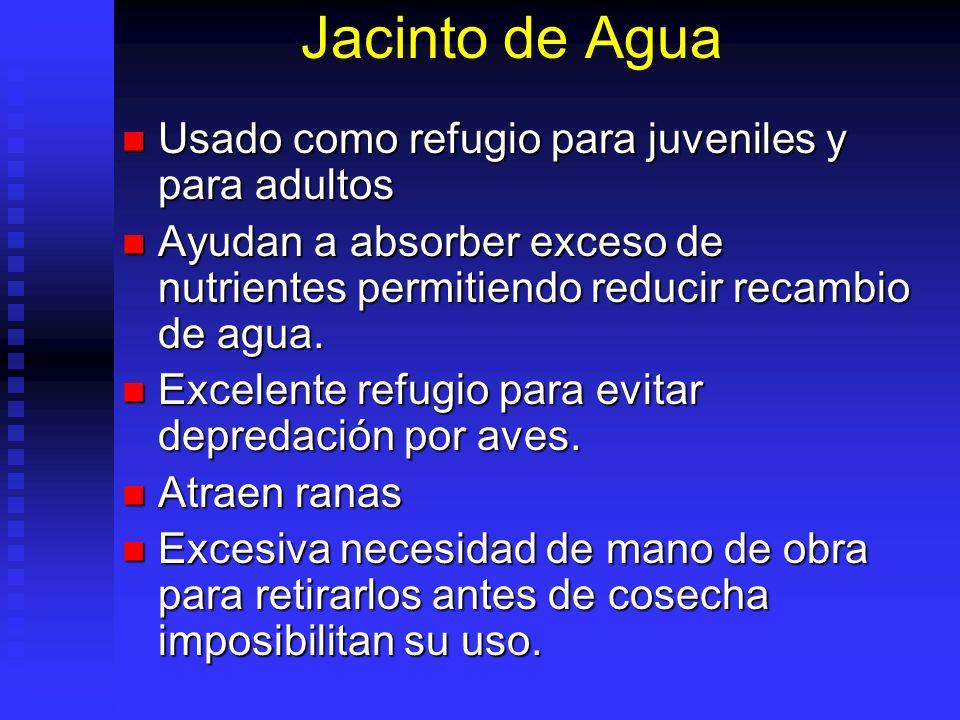 Jacinto de Agua Usado como refugio para juveniles y para adultos Usado como refugio para juveniles y para adultos Ayudan a absorber exceso de nutrient