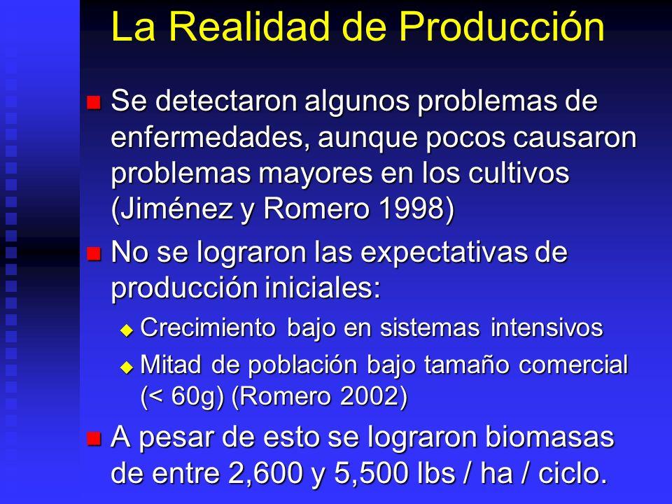 La Realidad de Producción Se detectaron algunos problemas de enfermedades, aunque pocos causaron problemas mayores en los cultivos (Jiménez y Romero 1