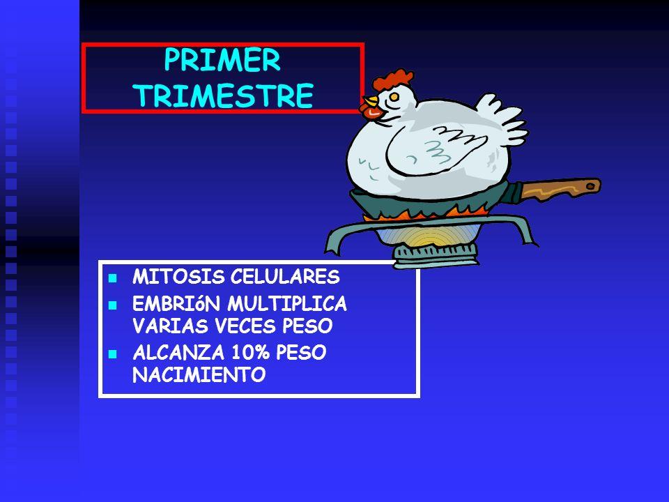 PRIMER TRIMESTRE MITOSIS CELULARES EMBRIóN MULTIPLICA VARIAS VECES PESO ALCANZA 10% PESO NACIMIENTO