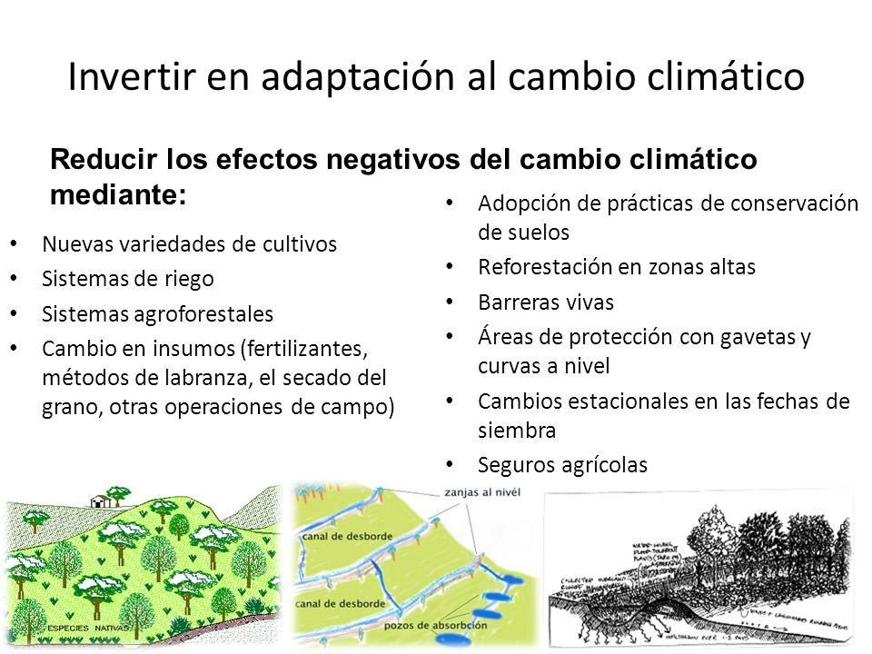 Invertir en adaptación al cambio climático Adopción de prácticas de conservación de suelos Reforestación en zonas altas Barreras vivas Áreas de protec