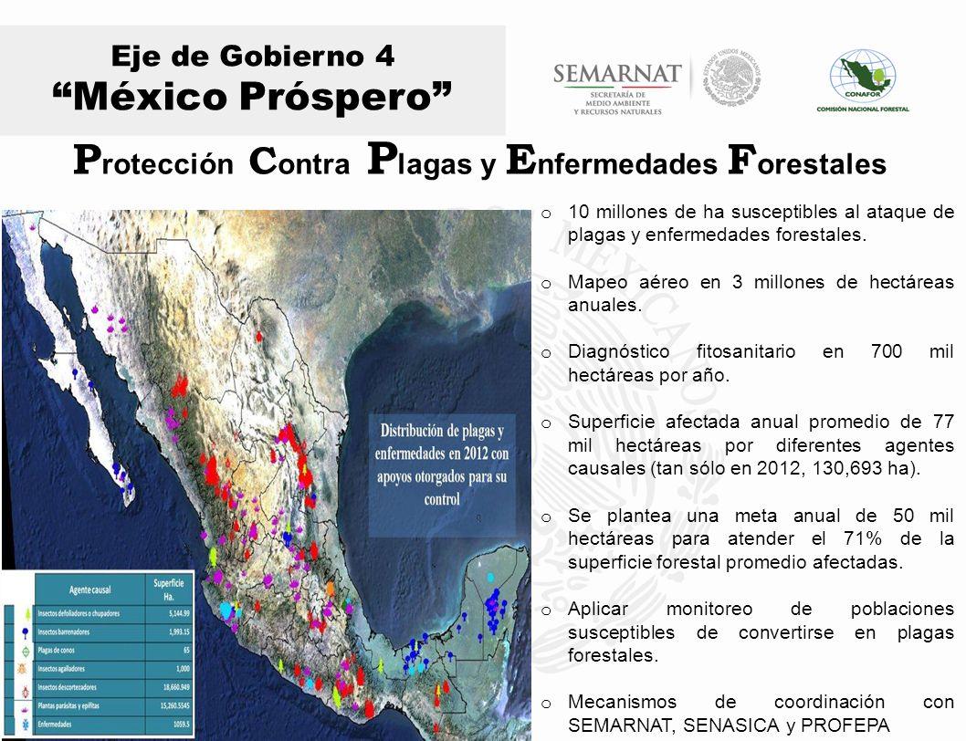 Eje de Gobierno 4 México Próspero o 10 millones de ha susceptibles al ataque de plagas y enfermedades forestales. o Mapeo aéreo en 3 millones de hectá