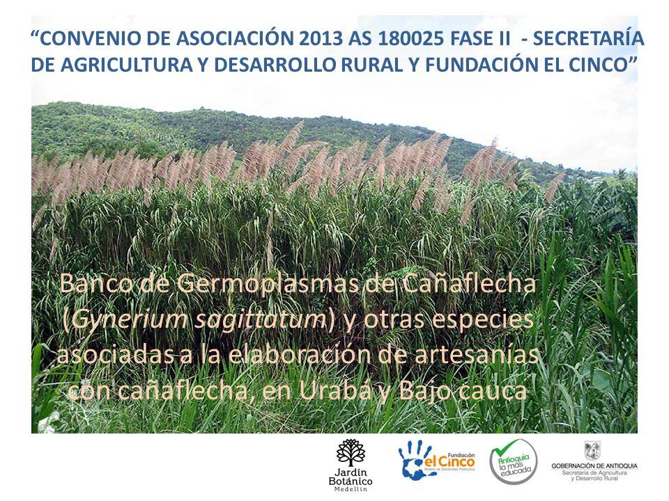 EQUIPO DE TRABAJO CONVENIO DE ASOCIACIÓN 2013 AS 180025 FASE II - SECRETARÍA DE AGRICULTURA Y DESARROLLO RURAL Y FUNDACIÓN EL CINCO Banco de Germoplas
