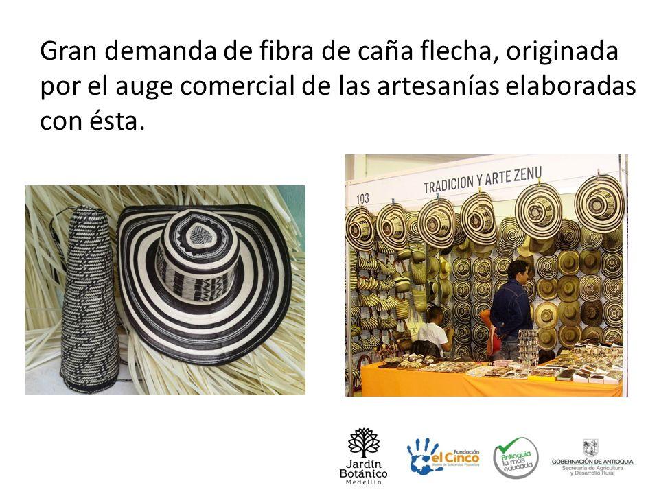 Gran demanda de fibra de caña flecha, originada por el auge comercial de las artesanías elaboradas con ésta.