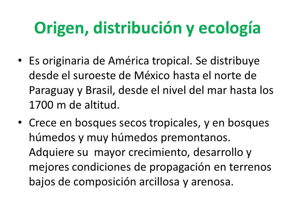Origen, distribución y ecología Es originaria de América tropical. Se distribuye desde el suroeste de México hasta el norte de Paraguay y Brasil, desd
