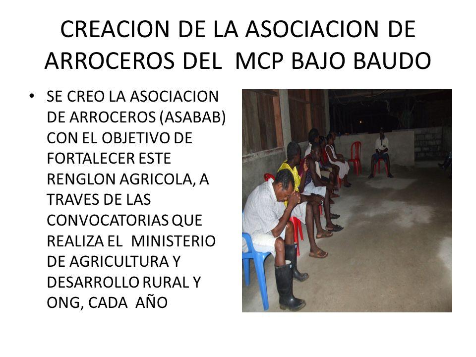 CONSTRUCCION DE VIVEROS SE CONSTRUYERON TRES VIVEROS (3) EN LAS COMUNIDADES DE SIVIRU, BELEN DE DOCAMPADO Y ORPUA Y SE GERMINARON $20.000 PLANTULAS DE CACAO
