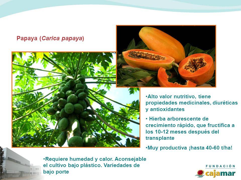 Papaya (Carica papaya) Alto valor nutritivo, tiene propiedades medicinales, diuréticas y antioxidantes Hierba arborescente de crecimiento rápido, que